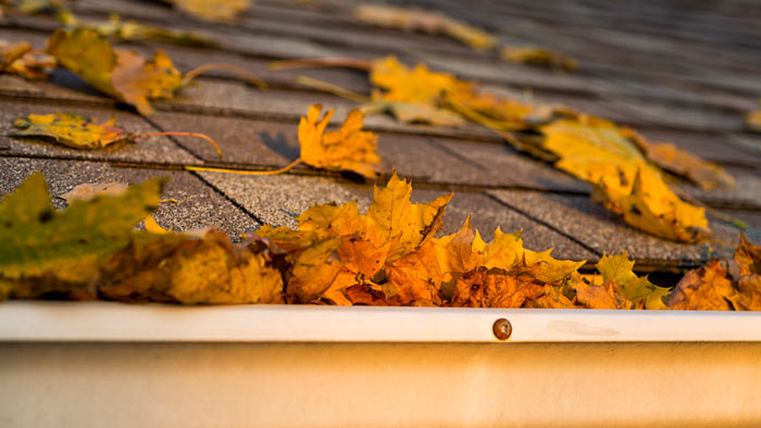 Leaf Removal Michigan Building Supplier